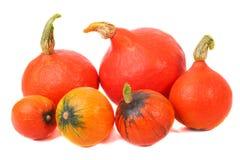 πορτοκαλιές κολοκύθε&si Στοκ Εικόνες