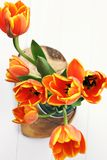 πορτοκαλιές τουλίπες &kappa Στοκ φωτογραφίες με δικαίωμα ελεύθερης χρήσης