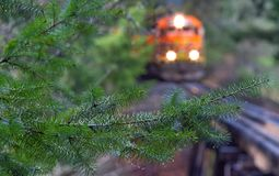 Πορτοκαλιοί ρόλοι τραίνων μέσω ενός υγρού δάσους του Όρεγκον στοκ εικόνες με δικαίωμα ελεύθερης χρήσης