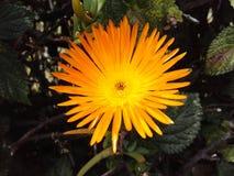Πορτοκαλής εξωτικός κήπος λουλουδιών Στοκ εικόνα με δικαίωμα ελεύθερης χρήσης