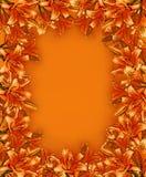 πορτοκαλής κρίνος κήπων πλαισίων Στοκ φωτογραφία με δικαίωμα ελεύθερης χρήσης