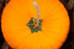 πορτοκαλής μίσχος κολ&omicro Στοκ εικόνα με δικαίωμα ελεύθερης χρήσης