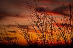 Πορτοκαλής ουρανός με τους κλάδους στοκ φωτογραφίες