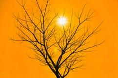 Πορτοκαλής ουρανός με το νεκρούς δέντρο και τον ήλιο Στοκ Φωτογραφίες