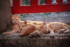 Πορτοκαλής σωρός Cuteness Στοκ Φωτογραφία