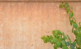πορτοκαλής τοίχος στοκ φωτογραφίες
