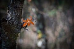 Πορτοκαλί άγριο λουλούδι στο σκοτεινό περιβάλλον τόνου Στοκ φωτογραφία με δικαίωμα ελεύθερης χρήσης