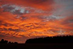 Πορτοκαλί δάσος Στοκ φωτογραφίες με δικαίωμα ελεύθερης χρήσης