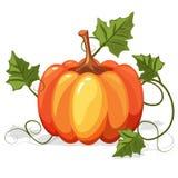 Πορτοκαλί λαχανικό κολοκύθας φθινοπώρου Στοκ φωτογραφίες με δικαίωμα ελεύθερης χρήσης