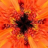 Πορτοκαλί γεωμετρικό σχέδιο κεντρικών κολάζ λουλουδιών Στοκ Εικόνες