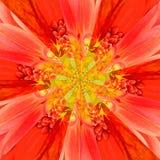 Πορτοκαλί γεωμετρικό σχέδιο κεντρικών κολάζ λουλουδιών Στοκ εικόνες με δικαίωμα ελεύθερης χρήσης
