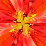 Πορτοκαλί γεωμετρικό σχέδιο κεντρικών κολάζ λουλουδιών Στοκ Φωτογραφία