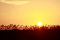 Πορτοκαλί ηλιοβασίλεμα πέρα από τους αμμόλοφους Στοκ φωτογραφία με δικαίωμα ελεύθερης χρήσης