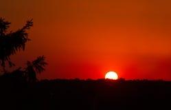 Πορτοκαλί ηλιοβασίλεμα πέρα από το δάσος Στοκ εικόνα με δικαίωμα ελεύθερης χρήσης