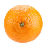 πορτοκαλί διάνυσμα καρπού σχεδίου εσπεριδοειδών σας Στοκ Εικόνα