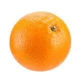 πορτοκαλί διάνυσμα καρπού σχεδίου εσπεριδοειδών σας Στοκ εικόνες με δικαίωμα ελεύθερης χρήσης