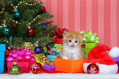 Πορτοκαλί και άσπρο τιγρέ γατάκι Χριστουγέννων Στοκ Φωτογραφίες