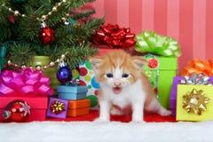 Πορτοκαλί και άσπρο τιγρέ γατακιών Χριστουγέννων Στοκ Εικόνες