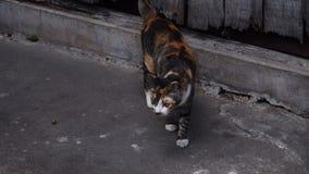 Πορτοκαλί και μαύρο γατάκι με τον γκρίζο τόνο backgroud Στοκ φωτογραφίες με δικαίωμα ελεύθερης χρήσης