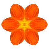 Πορτοκαλί καλειδοσκόπιο λουλουδιών Mandala Nasturium που απομονώνεται Στοκ εικόνα με δικαίωμα ελεύθερης χρήσης