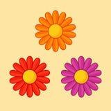 Πορτοκαλί, κόκκινο και ιώδες λουλούδι Στοκ Εικόνα