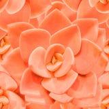 Πορτοκαλί μονοχρωματικό άνευ ραφής υπόβαθρο succulent Στοκ Εικόνα