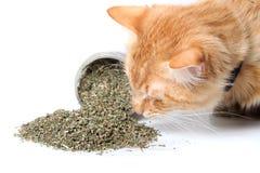 Πορτοκαλί ξηρό catnip ρουθουνίσματος γατών στοκ φωτογραφίες με δικαίωμα ελεύθερης χρήσης