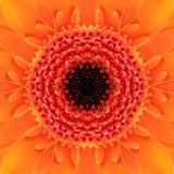 Πορτοκαλί ομόκεντρο κέντρο λουλουδιών. Kaleidoscopic σχέδιο Mandala Στοκ Φωτογραφία