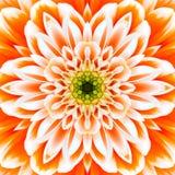 Πορτοκαλί ομόκεντρο κέντρο λουλουδιών. Kaleidoscopic σχέδιο Mandala Στοκ Εικόνα