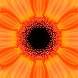 Πορτοκαλί ομόκεντρο Kaleidoscopic σχέδιο κεντρικού Mandala λουλουδιών Στοκ Εικόνα