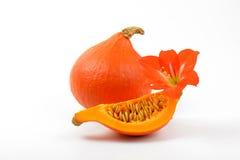 Πορτοκαλί λουλούδι κολοκυθών και hibiscus Στοκ φωτογραφία με δικαίωμα ελεύθερης χρήσης