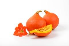 Πορτοκαλί λουλούδι κολοκυθών και hibiscus Στοκ Εικόνες