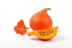 Πορτοκαλί λουλούδι κολοκυθών και hibiscus Στοκ Φωτογραφίες