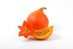 Πορτοκαλί λουλούδι κολοκυθών και hibiscus Στοκ εικόνες με δικαίωμα ελεύθερης χρήσης