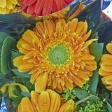 Πορτοκαλί λουλούδι μαργαριτών Gerber Στοκ Φωτογραφίες