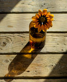 Πορτοκαλί λουλούδι σε ένα blottle Στοκ Εικόνες