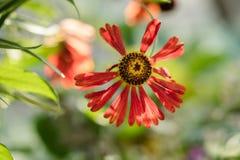 Πορτοκαλί λουλούδι Στοκ φωτογραφίες με δικαίωμα ελεύθερης χρήσης