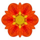 Πορτοκαλί λουλούδι Mandala Kaleidoscopic που απομονώνει στο λευκό Στοκ Εικόνες