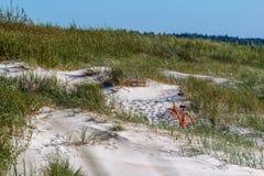 Πορτοκαλί ποδήλατο στον αμμόλοφο άμμου στοκ φωτογραφία με δικαίωμα ελεύθερης χρήσης