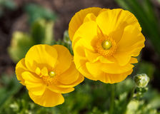 Πορτοκαλί πράσινο υπόβαθρο λουλουδιών Στοκ φωτογραφία με δικαίωμα ελεύθερης χρήσης
