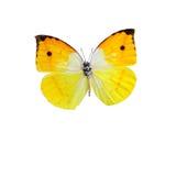 Πορτοκαλί φτερωτό κόμμα πεταλούδων πεταλούδων Στοκ εικόνες με δικαίωμα ελεύθερης χρήσης