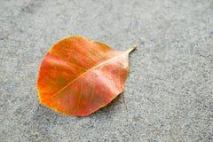 Πορτοκαλί φύλλο στο συγκεκριμένο υπόβαθρο Στοκ Φωτογραφία