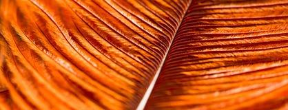 Πορτοκαλί χρώμα φτερών πουλιών Στοκ φωτογραφία με δικαίωμα ελεύθερης χρήσης