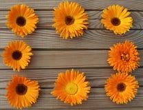 Πορτοκαλί marigold σε ένα ξύλινο υπόβαθρο πινάκων στοκ εικόνα