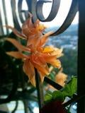 πορτοκαλί orchid Στοκ φωτογραφία με δικαίωμα ελεύθερης χρήσης