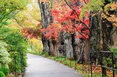 πορτοκαλιά δέντρα λιβαδιών φύλλων σημύδων φθινοπώρου στοκ φωτογραφία