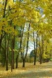 πορτοκαλιά δέντρα λιβαδιών φύλλων σημύδων φθινοπώρου Στοκ φωτογραφία με δικαίωμα ελεύθερης χρήσης