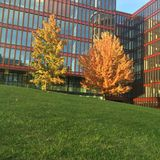 πορτοκαλιά δέντρα λιβαδιών φύλλων σημύδων φθινοπώρου Στοκ εικόνες με δικαίωμα ελεύθερης χρήσης