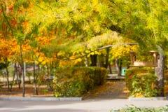 πορτοκαλιά δέντρα λιβαδιών φύλλων σημύδων φθινοπώρου Στοκ Εικόνες