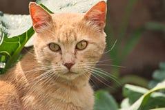 Πορτοκαλιά γάτα ευτυχής στη φύση Στοκ εικόνα με δικαίωμα ελεύθερης χρήσης